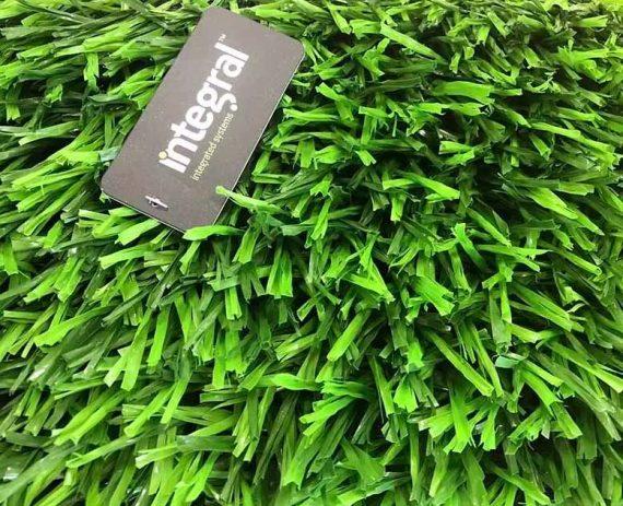 classis grass